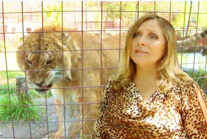 Carole Baskin CEO at Big Cat Rescue Center Liger Zoo located in Tampa, Florida, USA.