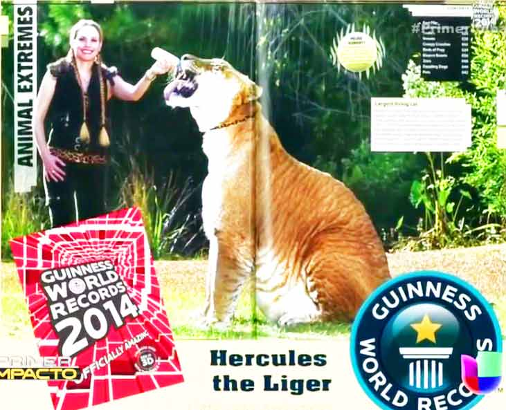 Myrtle Beach Safari Liger Zoo has also appeared within Guinness Book of World Records as well.