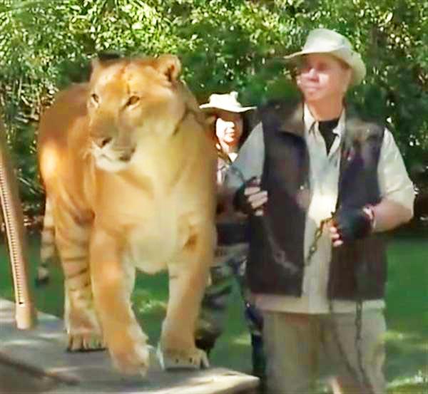 South Carolina Usa Liger Zoos