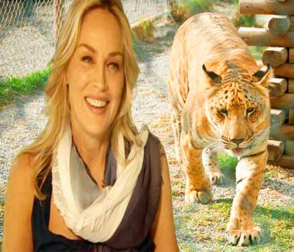 Sharon Stone has worked with Wildlife Waystation Liger Zoo in California, USA.